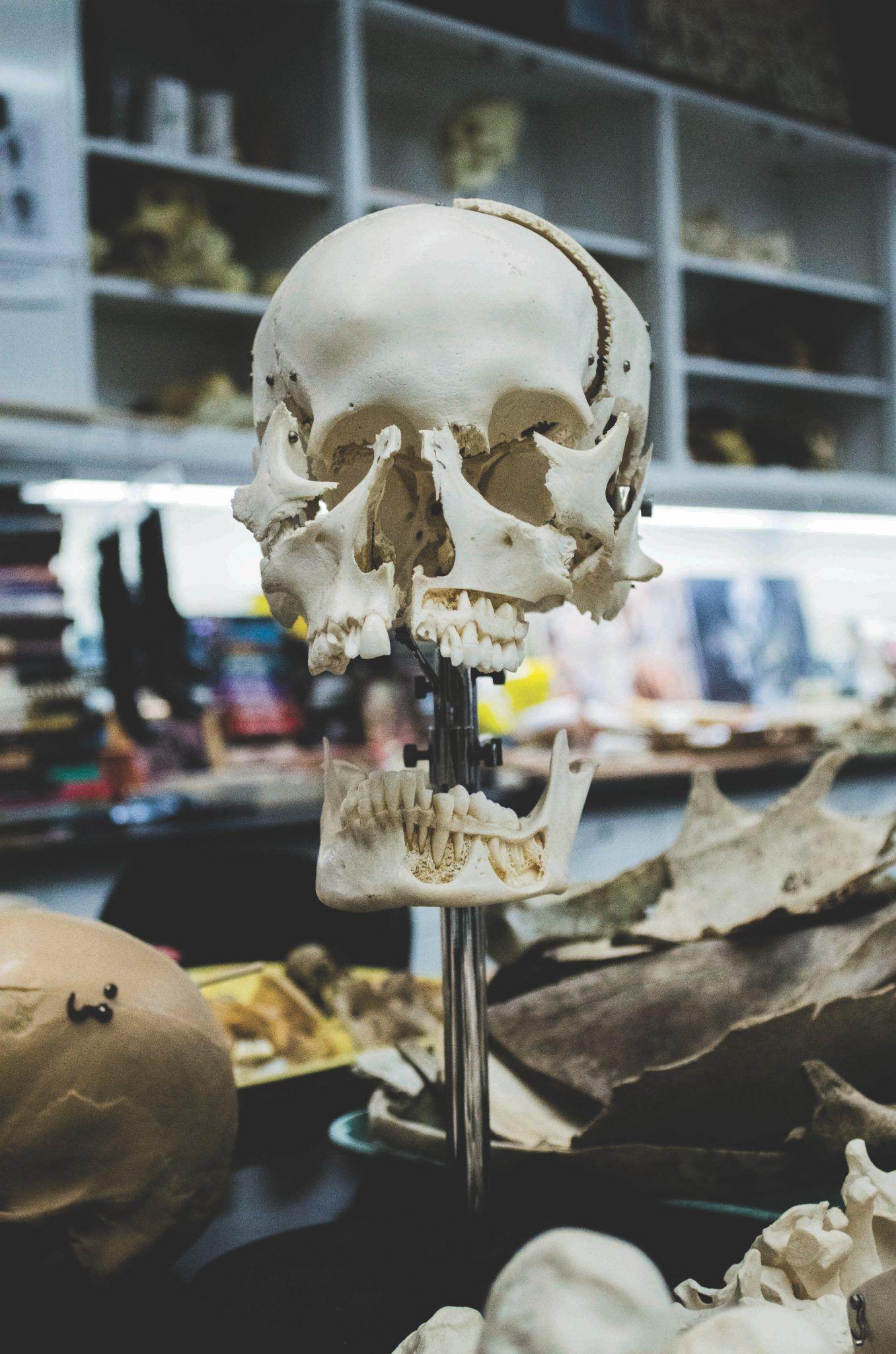 Importancia de la Odontología Forense I