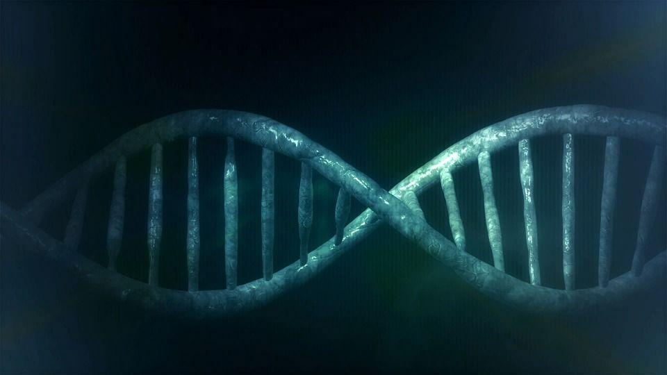 La mayoría del ADN ocurre en la reproducción de las células