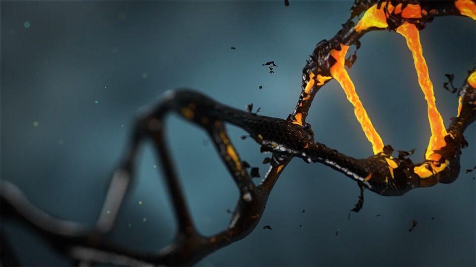 Daño al ADN celular y cáncer